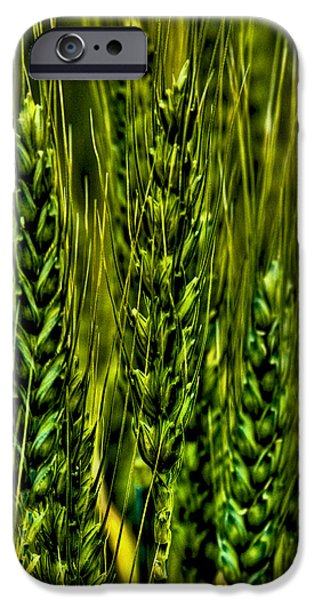 Surrealism Digital iPhone Cases - Unripened Wheat iPhone Case by David Patterson