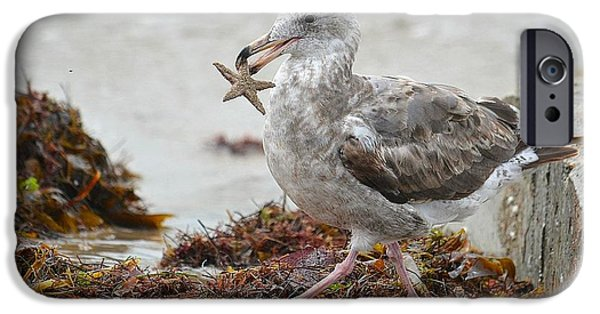 Seagull Carrying Starfish iPhone Cases - Unwilling Star iPhone Case by Fraida Gutovich