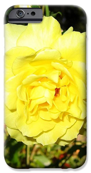 Upbeat Yellow Rose iPhone Case by Will Borden