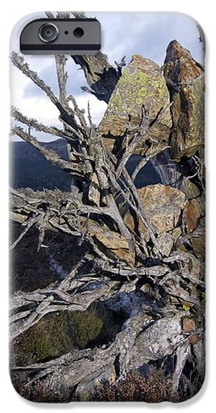 Uprooted Scot's Pine Tree iPhone Case by Duncan Shaw