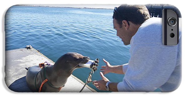 California Sea Lions iPhone Cases - Us Navy California Sea Lion iPhone Case by Louise Murray