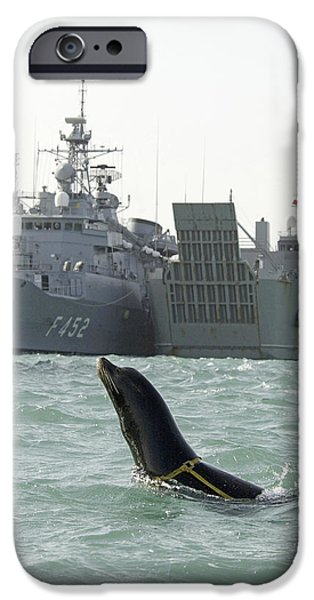 California Sea Lions iPhone Cases - Us Navy California Sea Lion iPhone Case by Us Navy