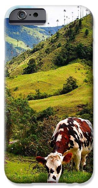 Vaca iPhone Case by Skip Hunt