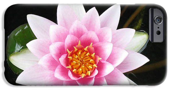 Asymmetrical iPhone Cases - Vertical Water Lily iPhone Case by Debbie Finley