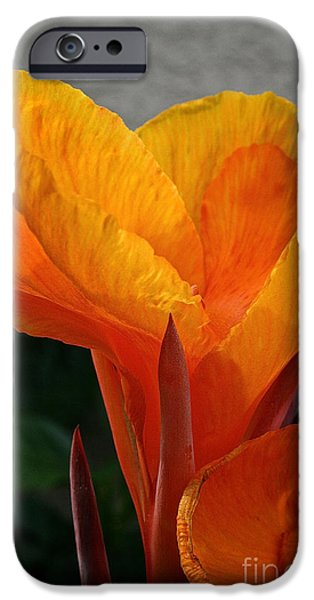 Vibrant Canna iPhone Case by Susan Herber
