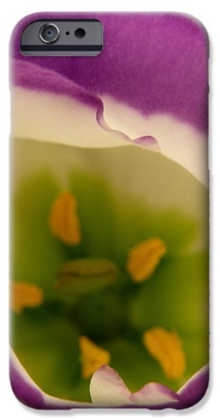 Vibrant iPhone Case by Lainie Wrightson