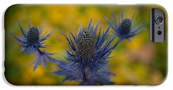 Stamen iPhone Cases - Vibrant Thistles iPhone Case by Mike Reid