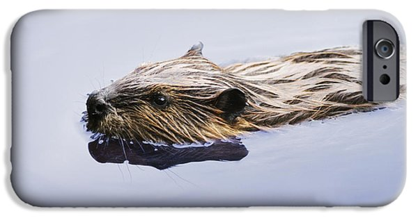 Beaver iPhone Cases - View Of Beaver, Chaudiere-appalaches iPhone Case by Yves Marcoux
