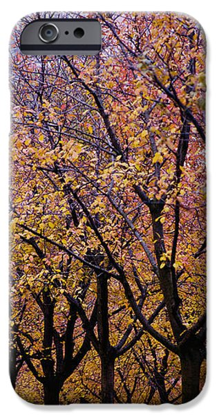 View Of Prague From Mala Strana Park iPhone Case by Axiom Photographic