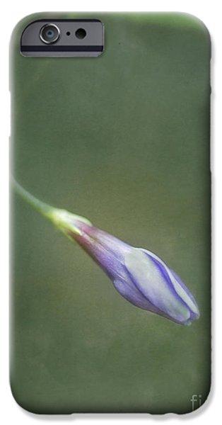 Plants Digital Art iPhone Cases - Vinca iPhone Case by Priska Wettstein