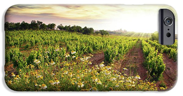 Grapevines iPhone Cases - Vineyard iPhone Case by Carlos Caetano
