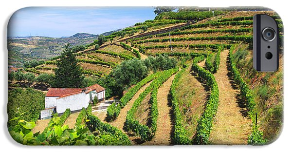 Agriculture iPhone Cases - Vineyard Landscape iPhone Case by Carlos Caetano