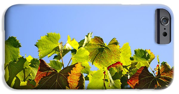 Grapevine Red Leaf iPhone Cases - Vineyard Leaves iPhone Case by Carlos Caetano