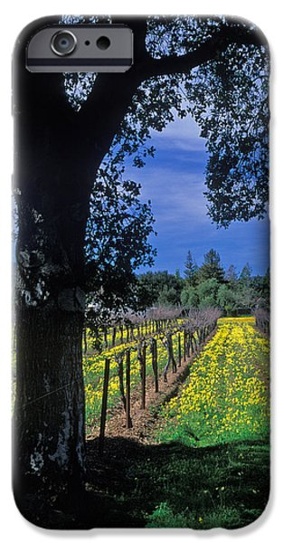 Vineyard Prints iPhone Cases - Vineyard View iPhone Case by Kathy Yates