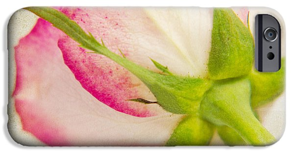Flora Mixed Media iPhone Cases - Vintage rose iPhone Case by Angela Doelling AD DESIGN Photo and PhotoArt