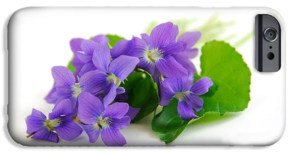 Violet Photographs iPhone Cases - Violets on white background iPhone Case by Elena Elisseeva