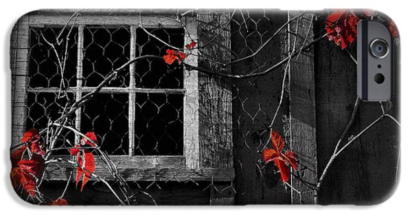 Old Barns iPhone Cases - Virginia Creeper iPhone Case by Thomas Schoeller