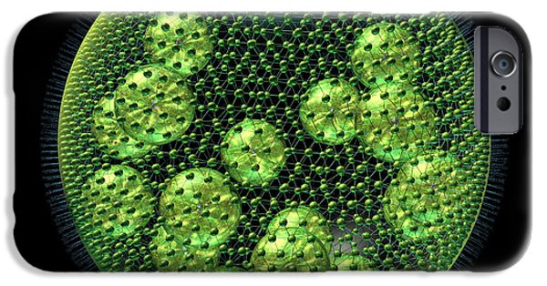 Alga iPhone Cases - Volvox iPhone Case by Russell Kightley