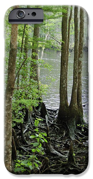 River View iPhone Cases - Waccamaw View II iPhone Case by Suzanne Gaff