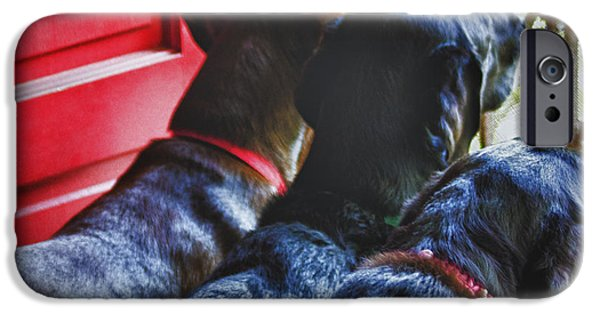 Chocolate Lab iPhone Cases - Waiting For Momma iPhone Case by Roger Wedegis