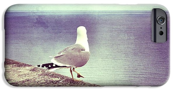 Flying Seagull iPhone Cases - Waiting... iPhone Case by Marianna Mills