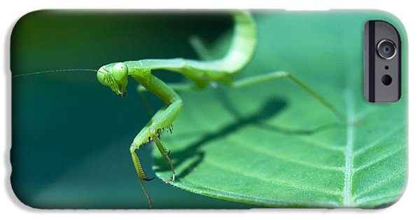 Mantodea iPhone Cases - Walking Mantis iPhone Case by Zoe Ferrie