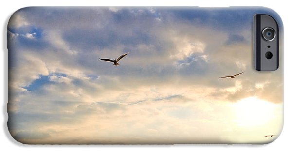 Flying Seagull iPhone Cases - Walkway Along Oceanfront iPhone Case by David Buffington