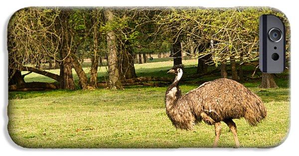 Emu iPhone Cases - Wandering Emu 1 iPhone Case by Douglas Barnett