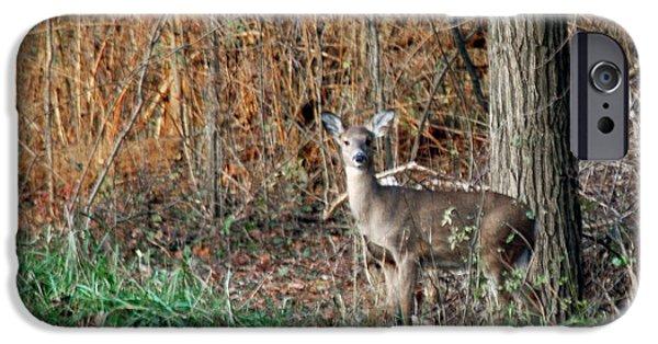 Nature Center Pond iPhone Cases - Watch Deer iPhone Case by LeeAnn McLaneGoetz McLaneGoetzStudioLLCcom