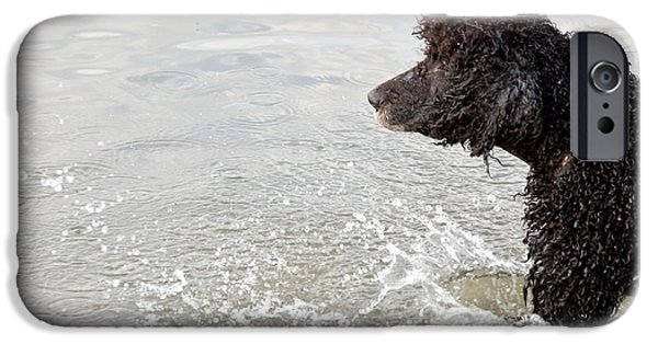 Dogs iPhone Cases - Water Dog iPhone Case by Jeannette Hunt