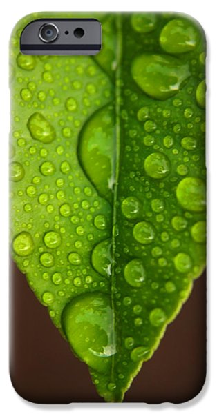 Leaf iPhone Cases - Water Droplets on Lemon Leaf iPhone Case by Ralph A  Ledergerber-Photography
