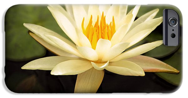 Waterlily iPhone Cases - Water Lily iPhone Case by Darren Fisher