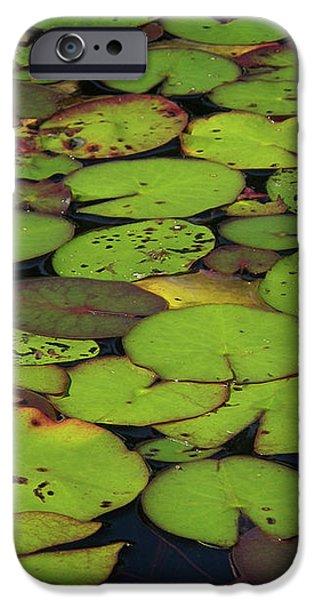 Water Lily iPhone Case by Elisabeth Van Eyken