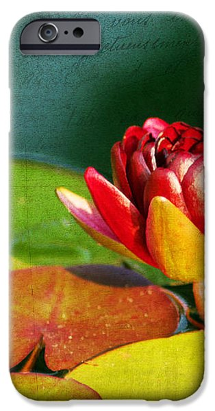 Water Lily II iPhone Case by Darren Fisher