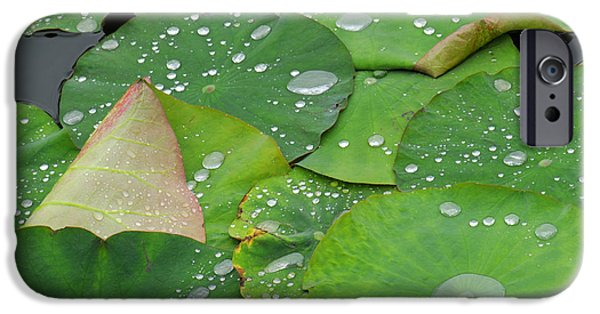 Close-up Photographs iPhone Cases - Waterdrops on lotus leaves iPhone Case by Silke Magino
