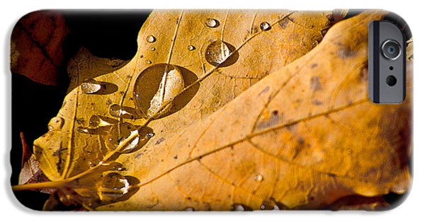 Fallen Leaf On Water iPhone Cases - Waterfall iPhone Case by Burney Lieberman