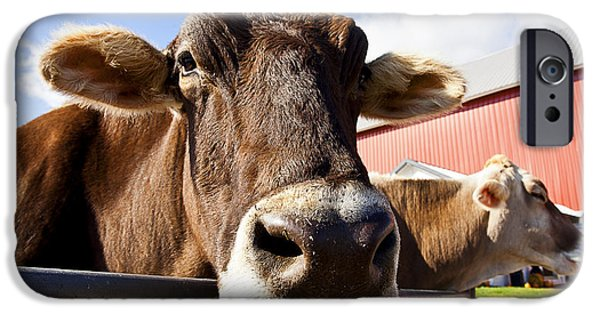 Brown Swiss iPhone Cases - We Dont Smile iPhone Case by CJ Schmit