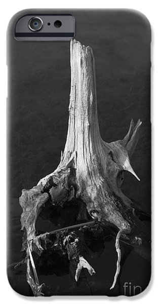 Weathered Stump iPhone Case by David Gordon
