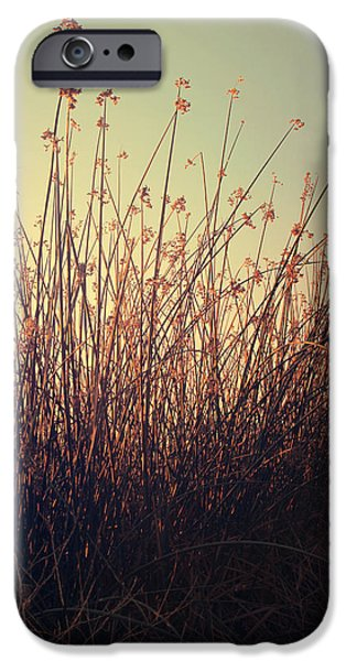 Cattails iPhone Cases - Weightless iPhone Case by Laurie Search