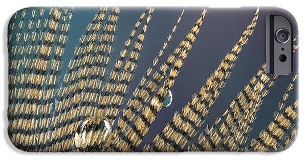 Jean Noren iPhone Cases - Wet Drop on Wood Duck Feather iPhone Case by Jean Noren