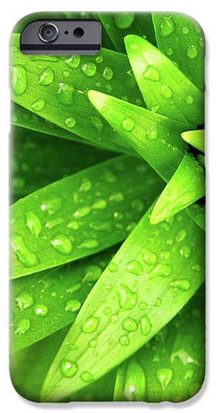 Wet Foliage iPhone Case by Carlos Caetano