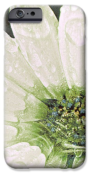 Wet Petals iPhone Case by Artist and Photographer Laura Wrede