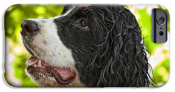 Springer Spaniel iPhone Cases - Wet Puppy 2 iPhone Case by Steve Harrington