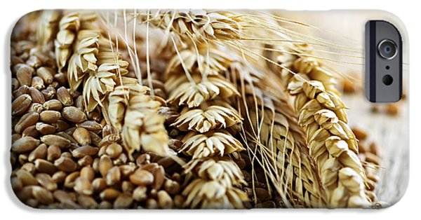 Rye iPhone Cases - Wheat ears and grain iPhone Case by Elena Elisseeva