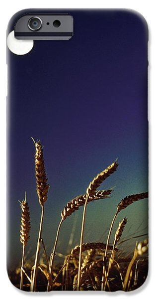 Simple Beauty In Colors iPhone Cases - Wheat Field At Night Under The Moon iPhone Case by The Irish Image Collection