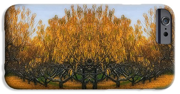 Foliage iPhone Cases - Which Way iPhone Case by Susan Candelario