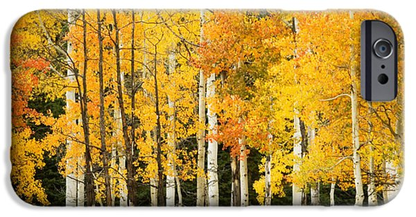 Northern Colorado iPhone Cases - White Aspen Trunks iPhone Case by Ron Dahlquist - Printscapes