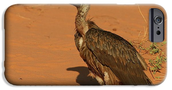 Vulture iPhone Cases - White-backed Vulture iPhone Case by Bruce J Robinson