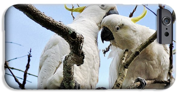 Cockatoo iPhone Cases - White Cockatoos iPhone Case by Kaye Menner