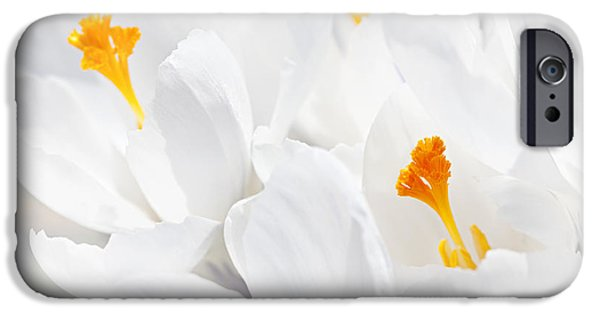 Stamen iPhone Cases - White crocus blossoms iPhone Case by Elena Elisseeva
